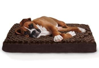 Top 5 Best Dog Beds 2018