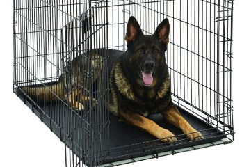 Top 10 Best XXL Dog Crates and XXXL Dog Crates 2020 Reviews