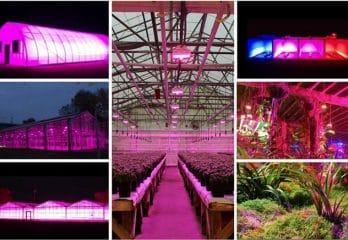 Top 12 Best 1000 Watt Led Grow Lights in 2020 Reviews – Buyer's Guide