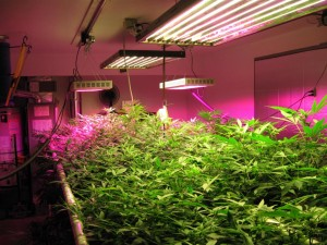 Top 10 Best LED Grow Lights Reviews in 2018 – Buyer's Guide