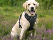 Top 10 Best No Pull Dog Harness in 2018 Reviews