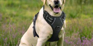 Rabbitgoo Dog Harness No-Pull Pet Harness Adjustable Outdoor Pet