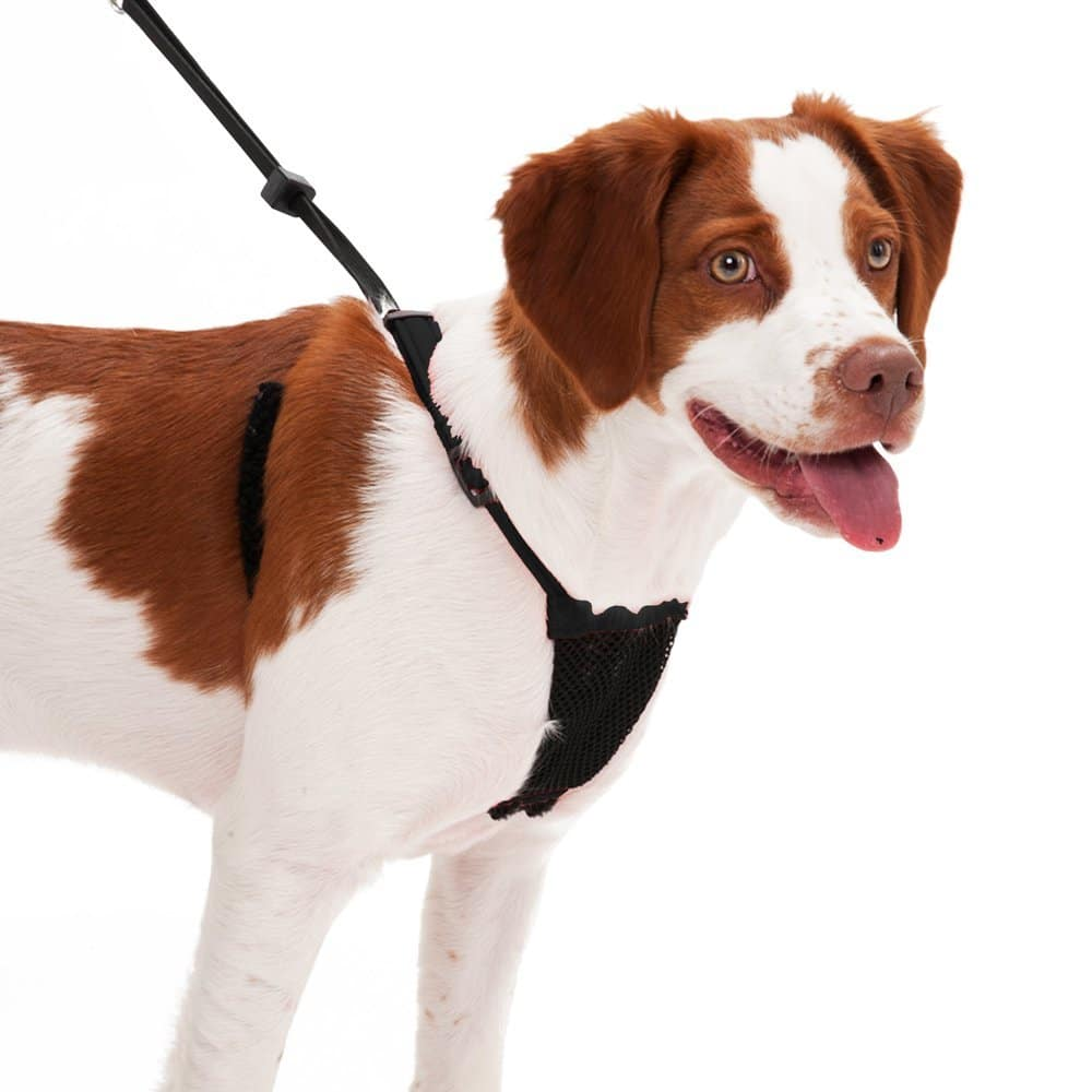 Best no pull dog harness 2017 – The Ultimate Buyer's Guide ...