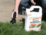 Top 10 Best Weed and Grass Killers in 2019 – Buyer's Guide