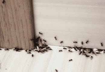 Top 10 Best Ant Killers 2019 Review – Buyer's Guides