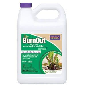 Bonide Burnout Concentrated Grass Killer