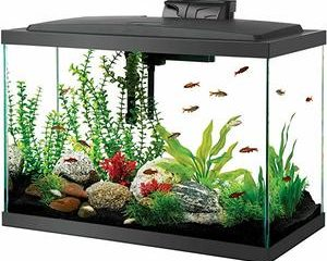Top 10 Best 20 Gallon Fish Tanks in 2021 Reviews